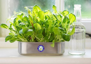 windowsill salad